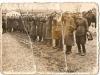 48. Manewry 1938. Zdjęcie nadesłała E.Świstak