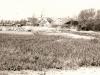 12. Budowa parku 550-lecia, lata 60-te. Ze zbiorów Z. Gnat-Wieteski