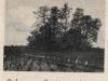 5. Podzamcze - cmentarz wojenny