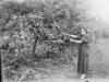 Kobieta w sadzie. Ze zbiorów Stefana Siudalskiego